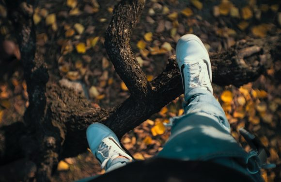 Standing on tree branch, looking down.