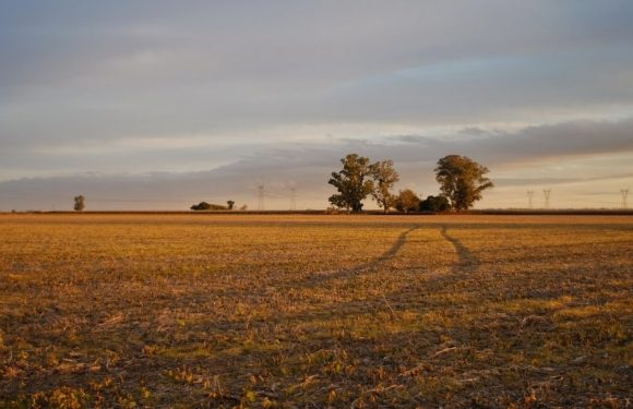 Empty field after Harvest