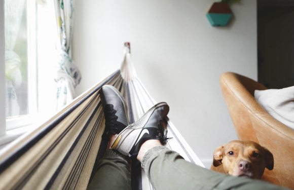 Person relaxing in hammock next to dog