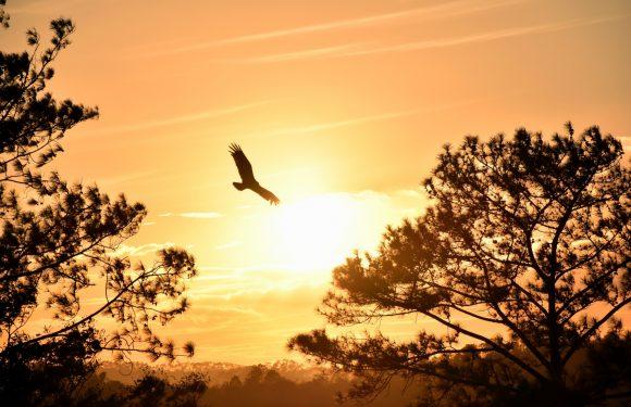 On Eagles Wings Photo Credit Sam Bark