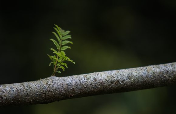 Close up photo of branch with new twig growing from it