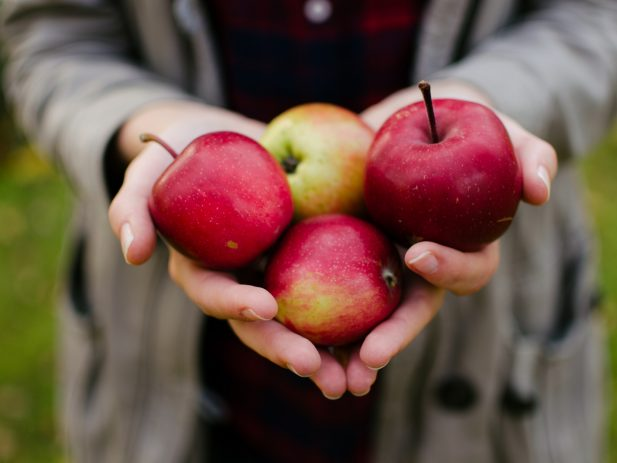 Person holding 4 red apples