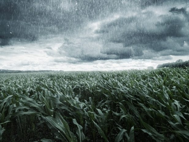 Rain and clouds over a corn field