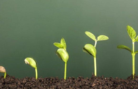 progression of plant growing