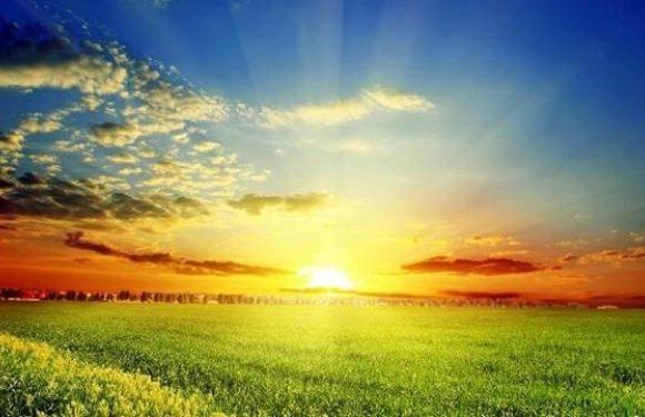 Sunrise over a field of grass