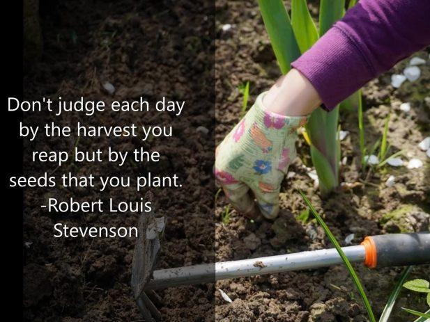 Digging in the garden soil