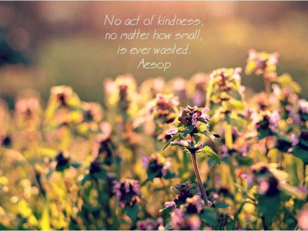 Field of flowers with quote from Aesop