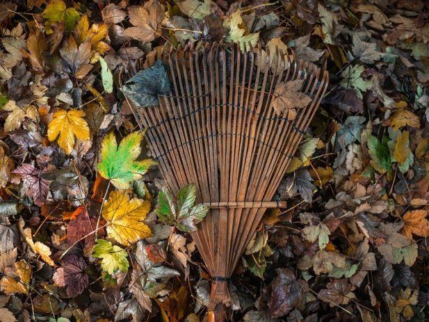 Fallen leaves and rake