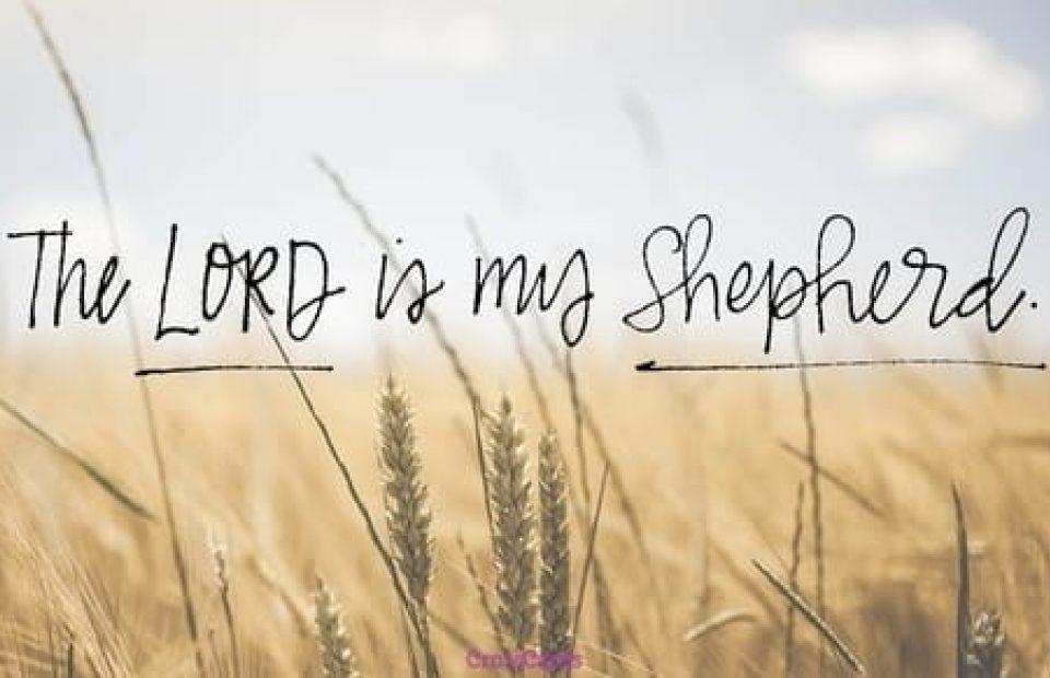 46814 lord shepherd 500w tn